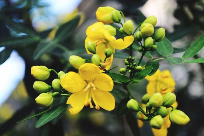 The Great Outdoors - 2017 EyeEm Awards Growth Nature Beauty In Nature Flower Yellow Freshness Plant Flower Head Outdoors Day