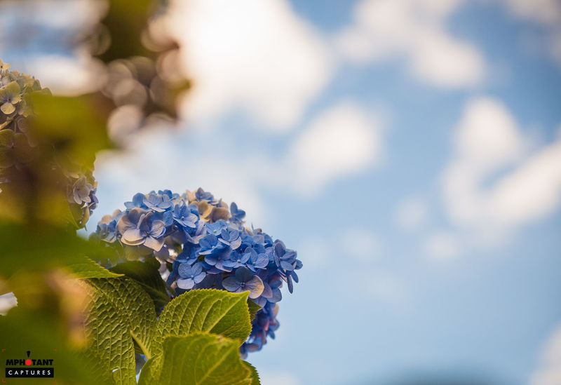Beauty In Nature Blue Branch Close-up Day Flower Focus On Foreground Fragility Freshness Growth Leaf Low Angle View Nature No People Outdoors Plant Selective Focus Sky Tranquility Tree