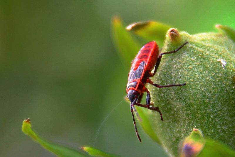 macro wildlife EyeEm Selects Leaf Red Insect Multi Colored Close-up Animal Themes Green Color Ant Animals Mating