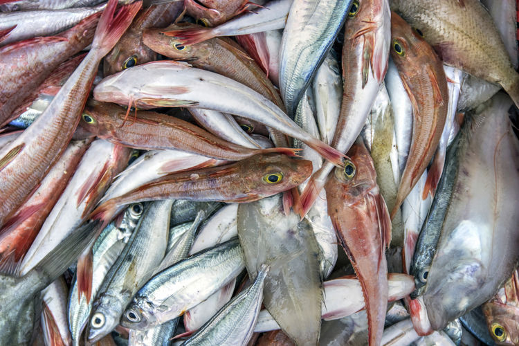 Several different types of fish captured in the adriatic sea