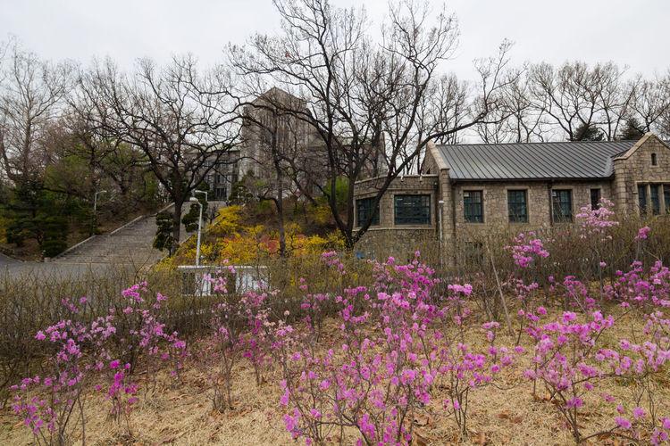 Purple flowering plants by building against sky