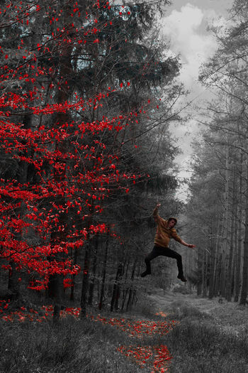 EyeEm Nature Lover EyeEmNewHere Jump Leave Lines Red WoodLand Adult Beauty In Nature Black Blackandwhite Colorkey Enjoying Life Flying Forest Jumping Leaves One Person Pullover Time For Spring Tree