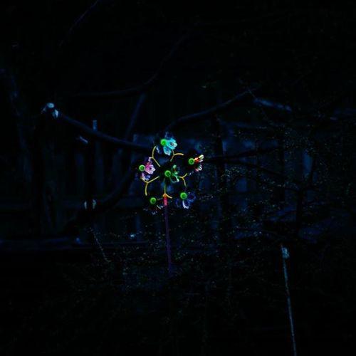 темнота ветер контраст вертушка блестит Ночь Dark Wind Contrast Whirligig Glitters Night Tree дерево