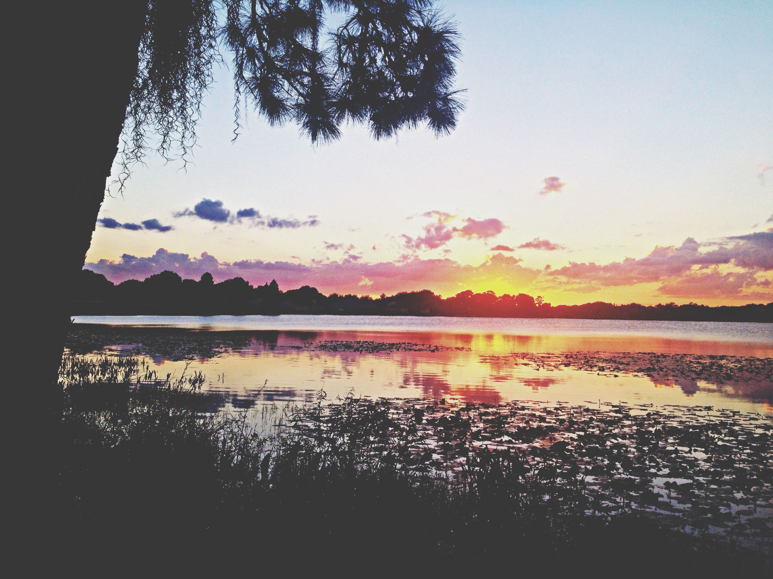 tranquil scene, sunset, tranquility, water, scenics, lake, beauty in nature, reflection, sky, silhouette, nature, tree, idyllic, mountain, calm, plant, outdoors, growth, no people, clear sky