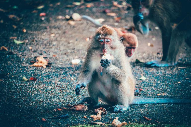 Monkeys sitting outdoors