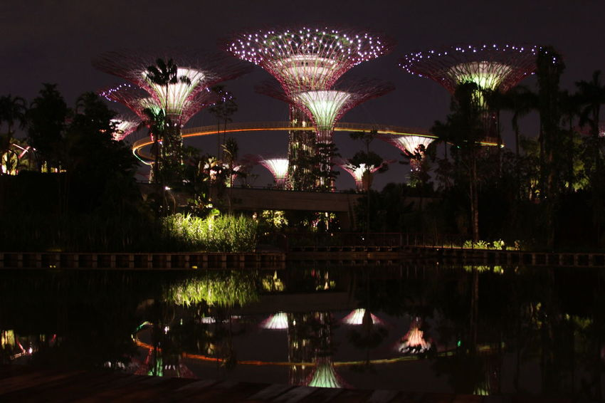 Gardens by the bay at night Light Singapore Illuminated Night No People Outdoors Reflection Sky Tree Water