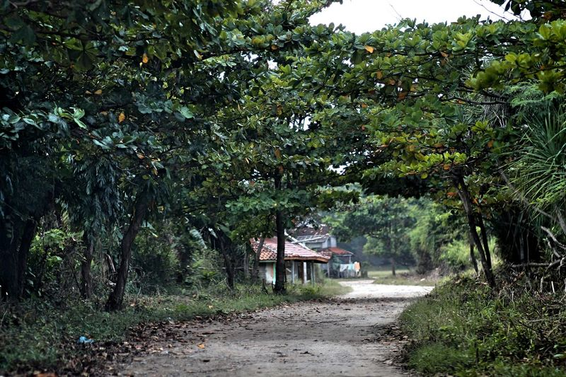 Tress Village View Indonesia_photography Kampong Green Leaf Forest Beauty In Nature Direction Tranquil Scene Plant Tree Tranquility Outdoors Day Land No People Nature Green Color Building Exterior House Building Built Structure Growth