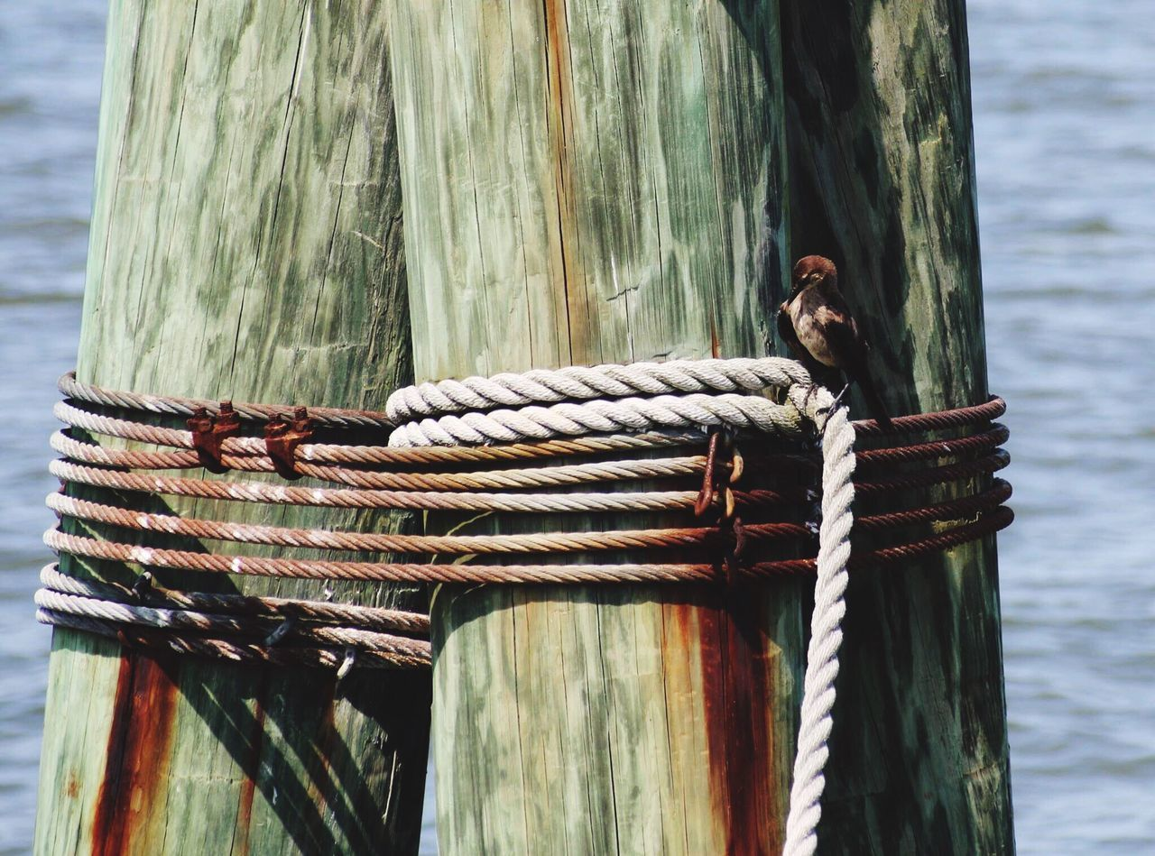 rope, water, focus on foreground, animal, wood - material, vertebrate, day, animal themes, no people, post, animal wildlife, one animal, tied up, wooden post, nature, perching, animals in the wild, bird, outdoors