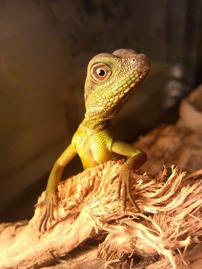 Taking Photos Lizards PetsRex Mylizard