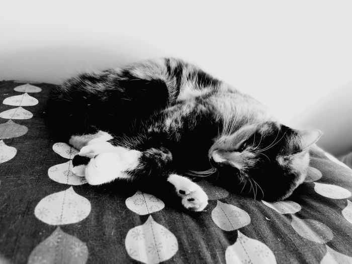 Cute Lovely Cat Lover Sleeping Cat Cat Lovers Calico Cat Relaxation Zabuton EyeEm Selects