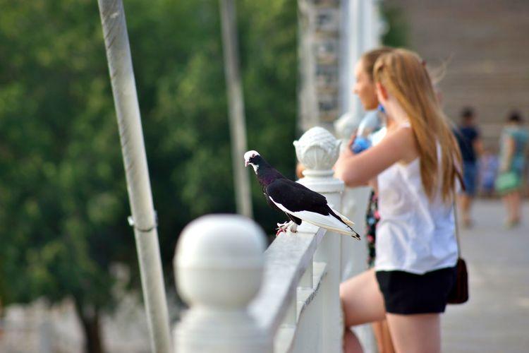 Pigeon on railing against friends standing on footbridge