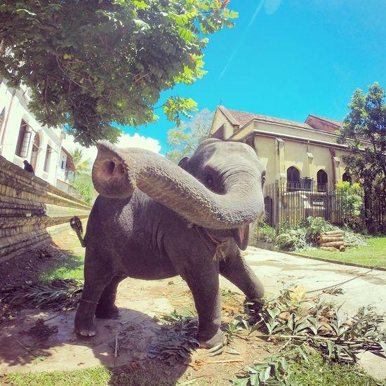 #gopro #animal #funny #nature #elepahnts #se #srilanka #elephant #travel Animal Themes Day Outdoors Sky Tranquility Travel