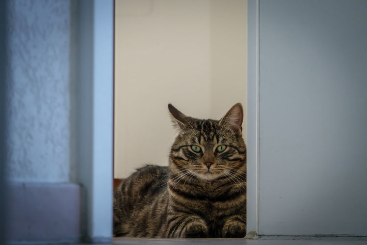 Close-up portrait of cat by window