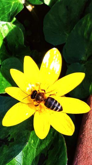le prime api