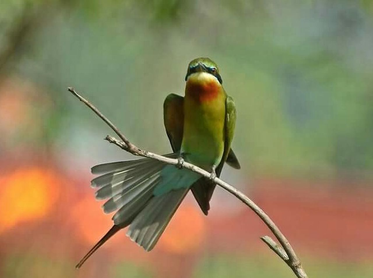 one animal, focus on foreground, animal themes, animal wildlife, no people, bird, day, animals in the wild, outdoors, close-up, nature, perching