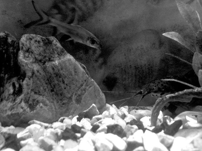 Fish Fishtank First Eyeem Photo Fishes !! Cleantank Pet Portraits