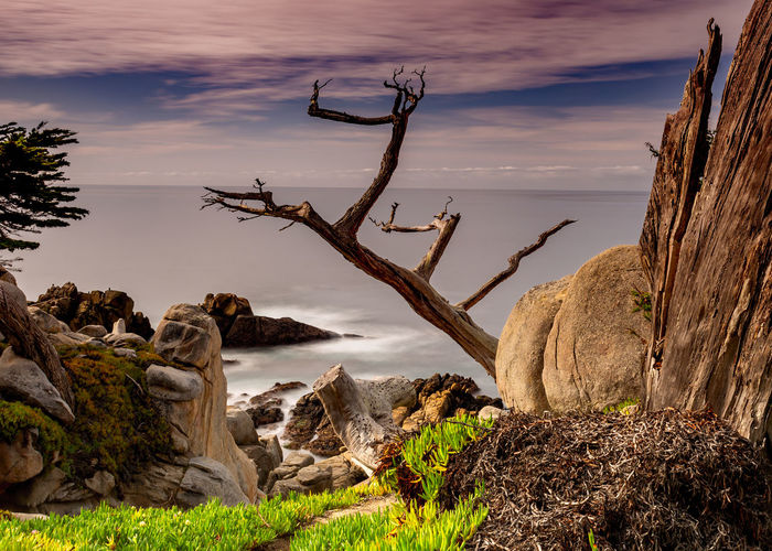 View of trees on rock formation against sky
