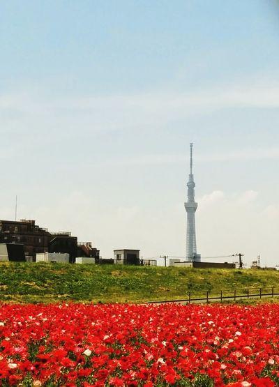 ポタ&ライド 荒サイ Scenery Flower Enjoying Life