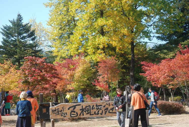 Rear view of people walking in park during autumn