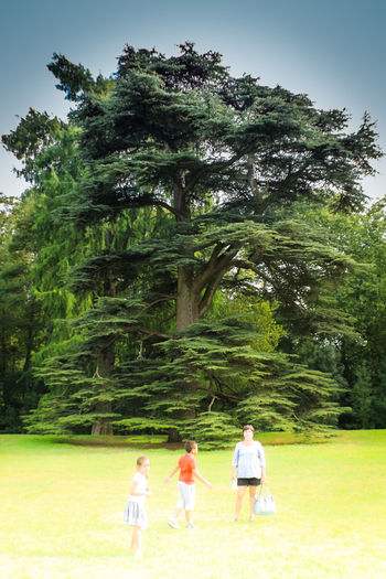 Big Tree Child Childhood Day Females Full Length Group Of People Nature Outdoors Over Exposed Overlighting People Sky Togetherness Tree