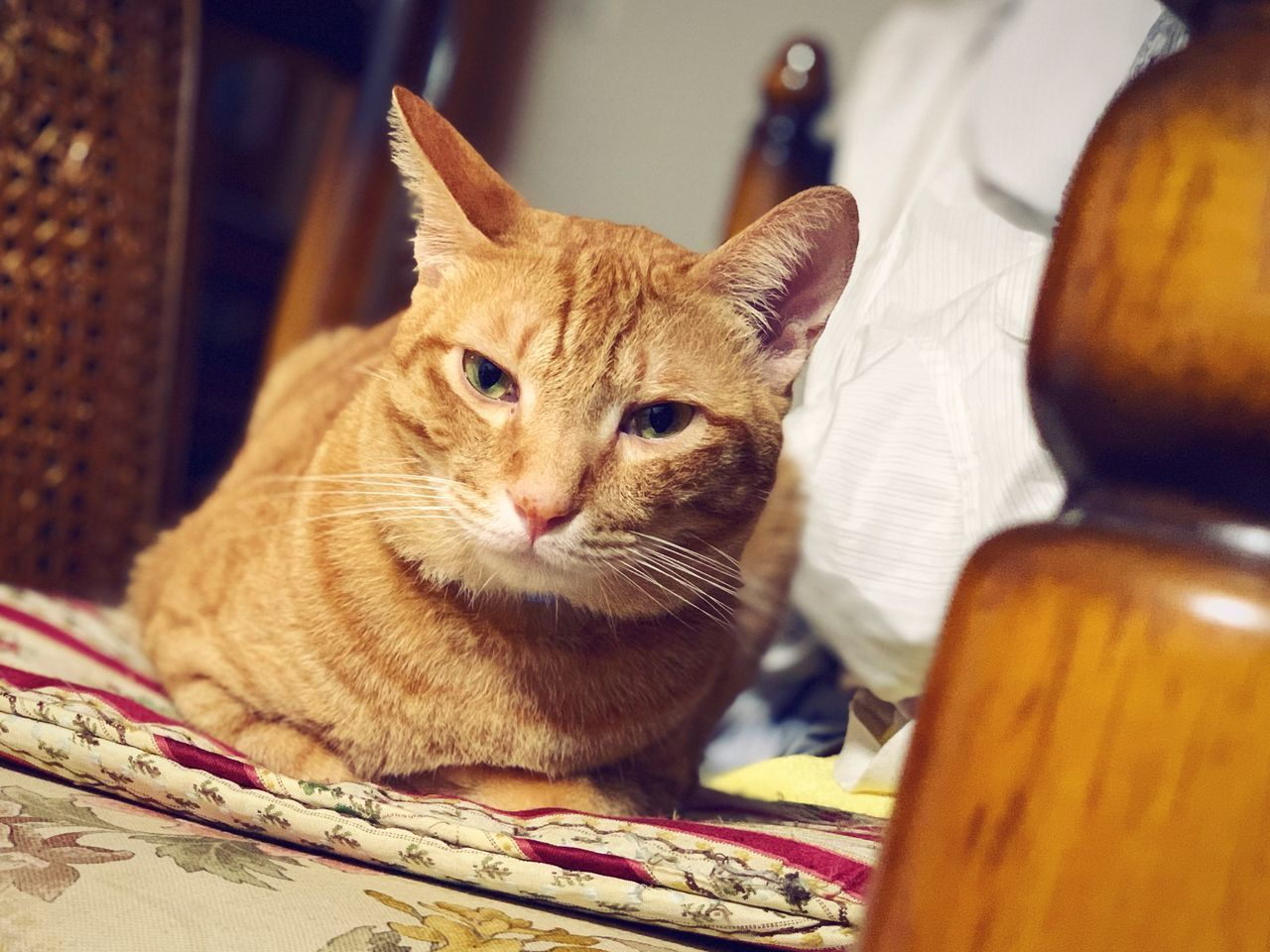 pets, domestic, cat, feline, domestic cat, domestic animals, mammal, animal themes, animal, one animal, vertebrate, indoors, no people, close-up, whisker, relaxation, selective focus, container, looking away, looking, ginger cat, animal head, tabby