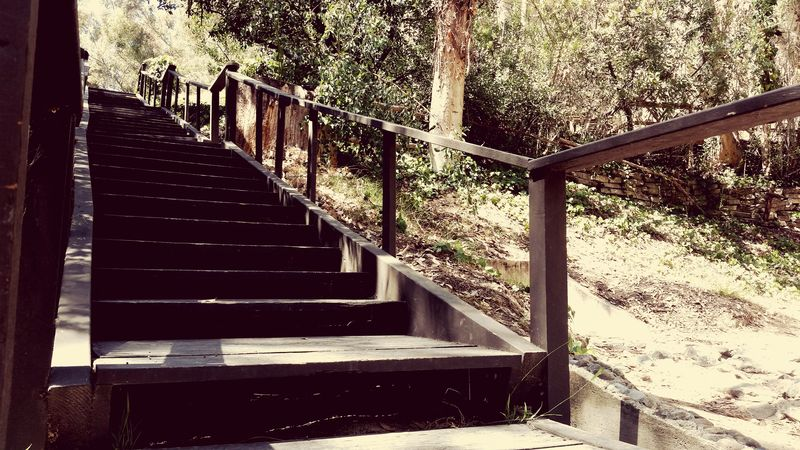 Stairway Nature Path Taking Photos In The Forest Enjoying Life Power Lines Greenery Traveler