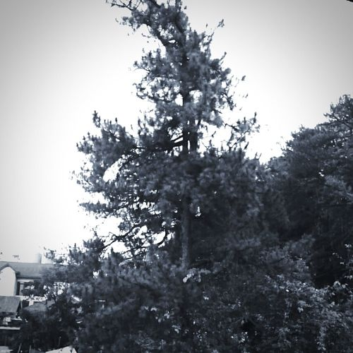 forest meets city #cityofpines