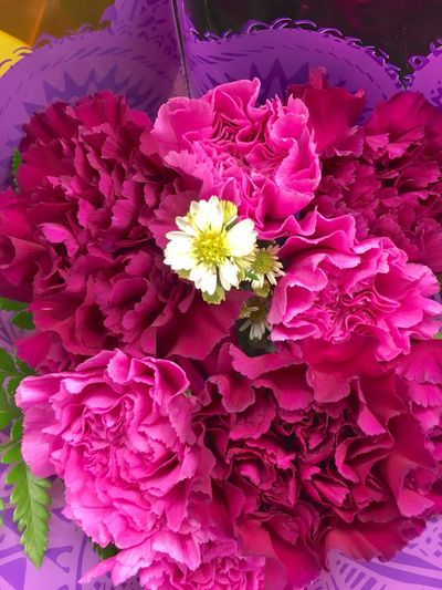 Flower Arrangement Flowers Colorful Floral Pattern Floral Decoration Decor Pinks And Purples Pink Purple Pink Flowers Carnation Fresh Eye Em Best Shots - Flowers EyeEm Best Shots - Flowers