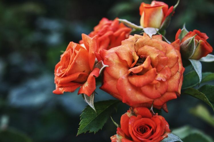 F L O W _ OVER Vellpic Tuapse Flower Flowering Plant Rosé Petal Plant Beauty In Nature Rose - Flower Inflorescence No People Nature Day