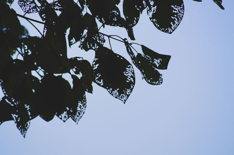 Low angle view of tree against clear sky