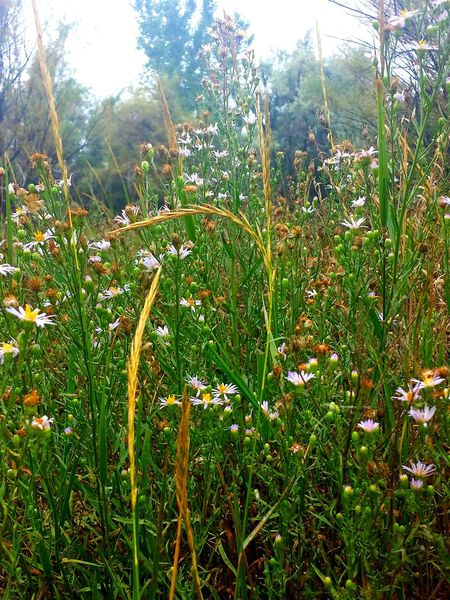 the last of summer's Wildflowers