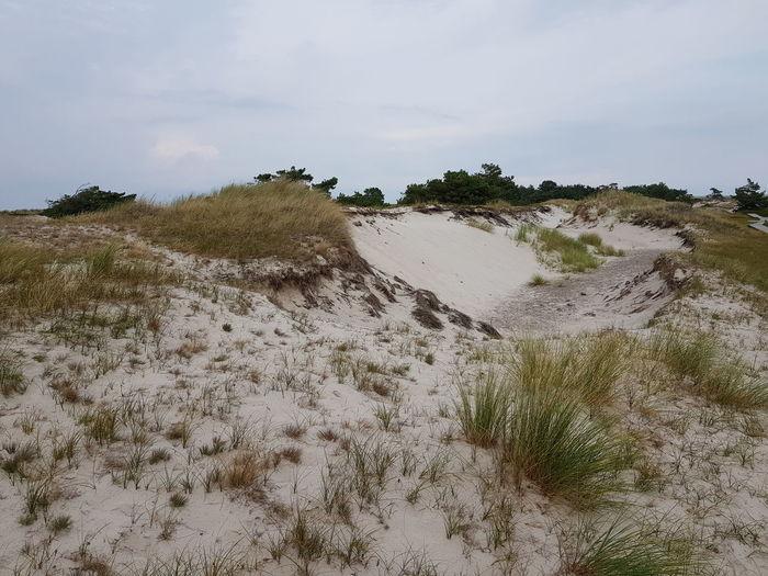 Dünen Baltic