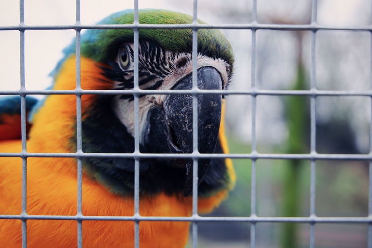 Animal Bird Trapped Cage Pets Confined Space Close-up HEAD