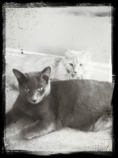 Bunny & Spike