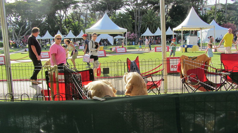Dogs Fair.. Love To Take Photos :)  Supernormal Hanging Out A Dogs Life