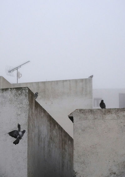 View of birds on wall