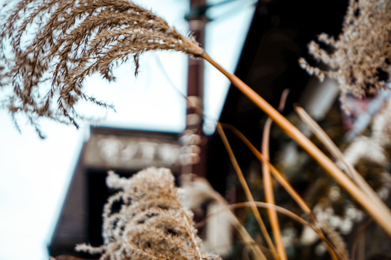 CLOSE-UP OF DRIED PLANT ON SNOW