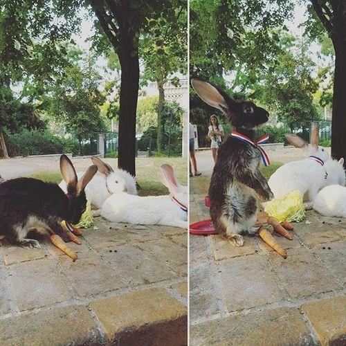 France Paris 에펠탑 Effeltower Rabbit Cute F4F Follow Like4like Likeforlike Bestoftheday 동물 토끼 소통 맞팔 😚
