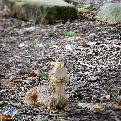 You talking to me 💪👊. Squirrel Show_us_nature Bd_animal Outdoors Canonphotography Nature_shooters Wildlife_perfection Putupyourdukes Tamzooka 150600 Ig_discover_wildlife