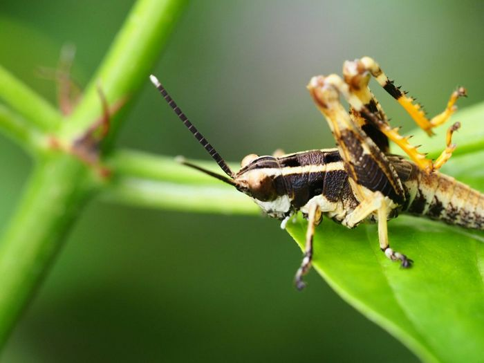 Walking Around Taking Photos Macro Nature EyeEm Nature Lover In The Park Macro Photography Insect Relaxing Grasshopper He can jump anytime!あんまりカメラで長時間寄ってたから、鬱陶しがって跳んでいっちゃった(笑)。
