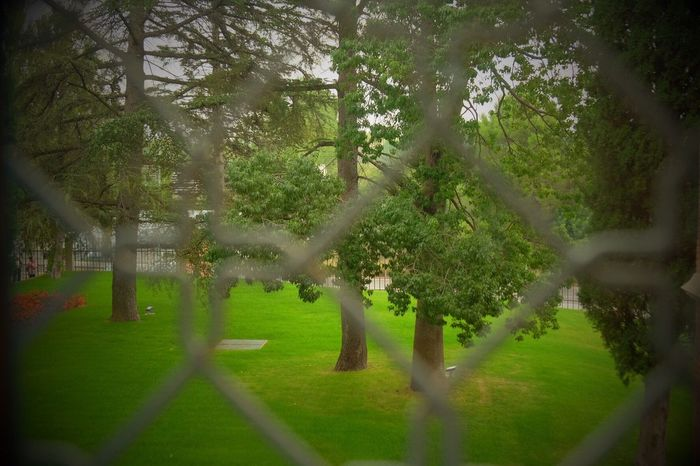 Nature Prison Grass Catalunya Catalunyaexperiencie Peremata Beauty In Nature No People Jail Green Color Garden