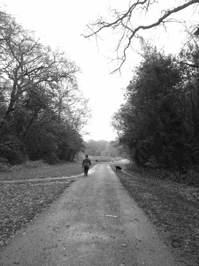 Sometimes we just need to walk with a friend... Solitary Moments Alone Path Walking Dog Monochromatic Rear View Full Length The Way Forward Road Walking Tree One Person Outdoors Day Real People Nature