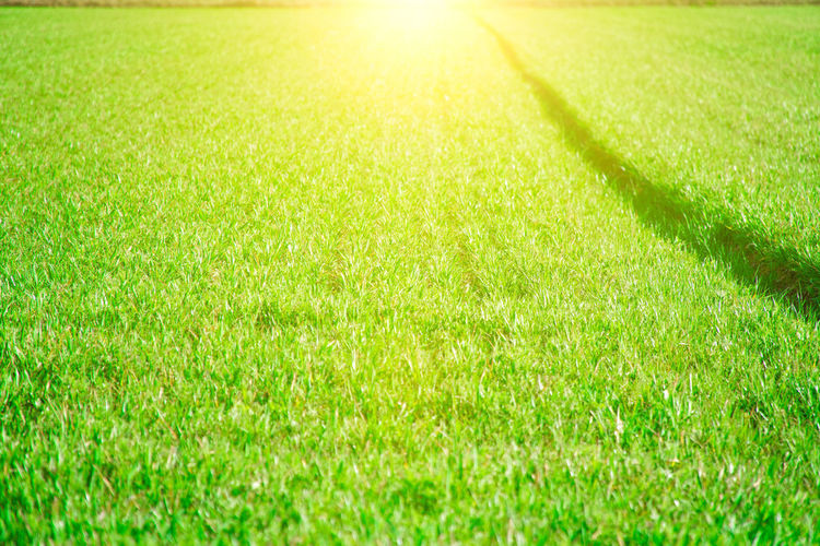 Grass Green Color Sunlight Plant Nature Sun Backgrounds Beauty In Nature Sport No People Full Frame Land Field Sunbeam Day Tranquility Environment Soccer Bright Playing Field Outdoors Springtime Lens Flare Brightly Lit Turf