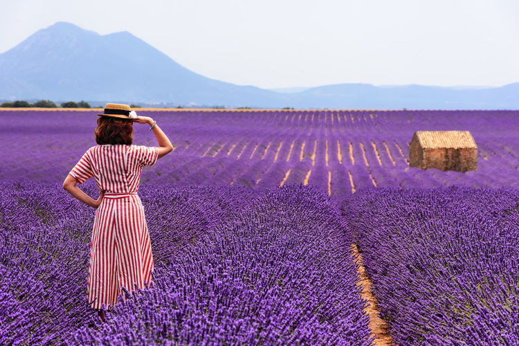 Rear view of woman standing on lavender field against clear sky