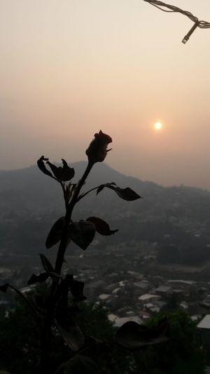 Una Rosa Al Amanecer...