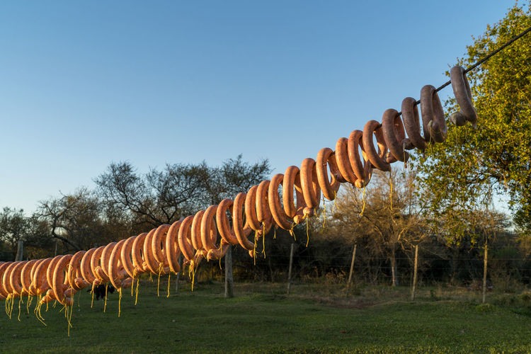 Artisanal preparation of pork and cow mix sausages made manually in the field