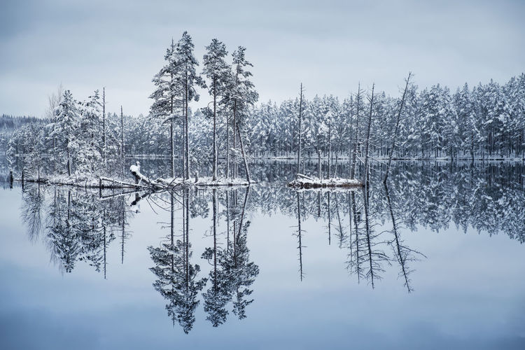 Scenic landscape with lake reflection and snow at winter evening Finland Moment Of Silence Pine Tranquility Beauty In Nature Blue Cold Temperature Forest Frozen Island Lake Landscape Nature No People Outdoors Peaceful Reflection Scenics Sky Snow Tranquil Scene Tranquility Tree Water Winter Shades Of Winter
