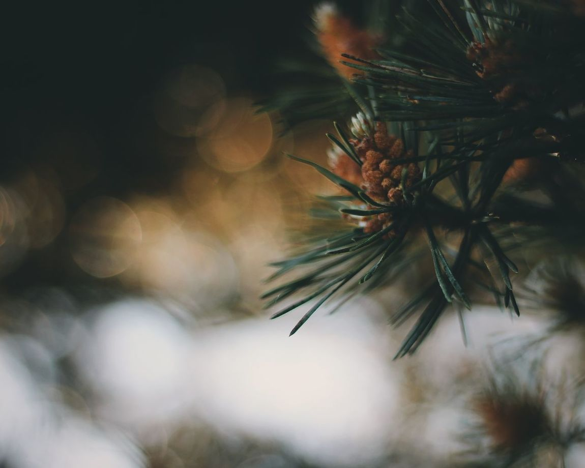 No People Close-up Nature Day Outdoors Beauty In Nature Sky Live For The Story The Great Outdoors - 2017 EyeEm Awards Lifestyles Nature Sunset Flower Vscofilm Tree Taking Photos Beauty In Nature Forest Landscape Adventure