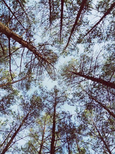 Forest Goldpolishautumn Tree Branch Backgrounds Full Frame Sky