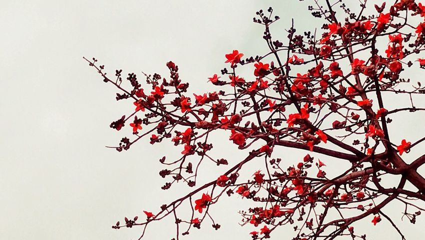 Red Nature Flower